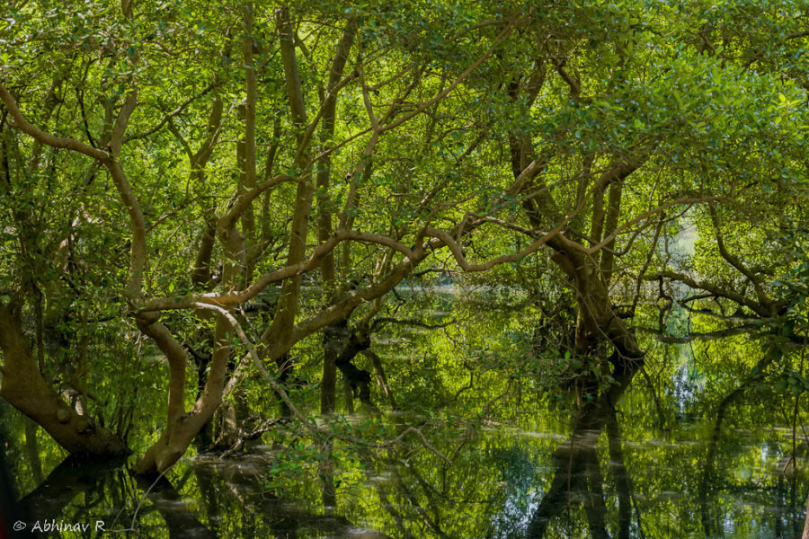 Mangroves Muzhappilangad Kannur