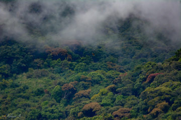 Pampadum Shola National Park - A Cool and Misty place in Sahyadri
