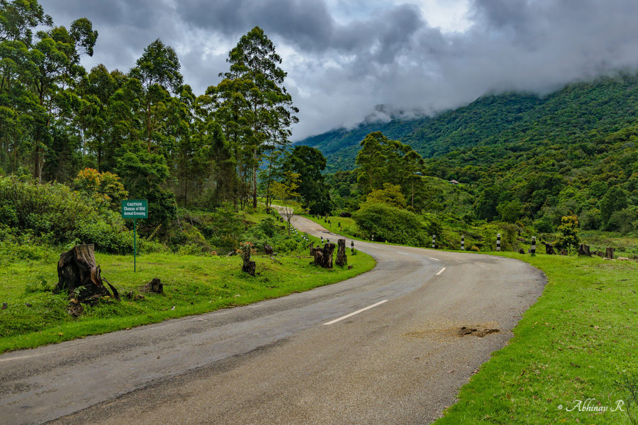 Pampadum Shola - Road to Vattavada