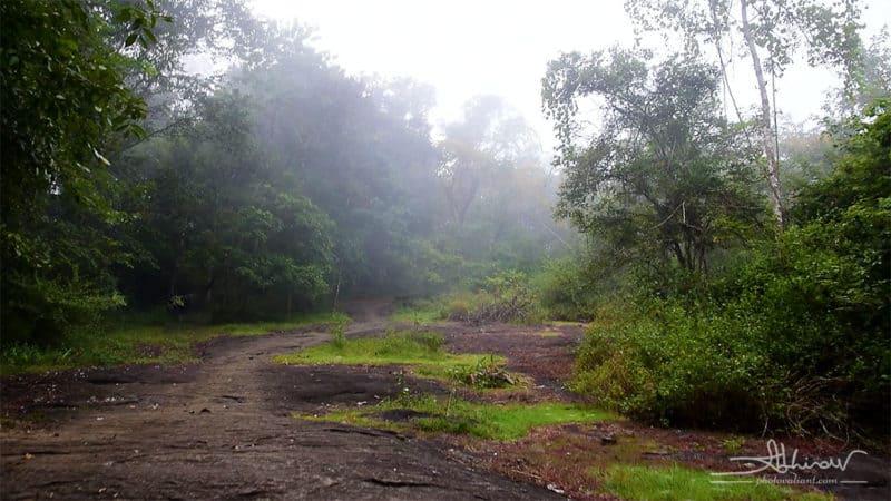 A misty morning in Thattekad