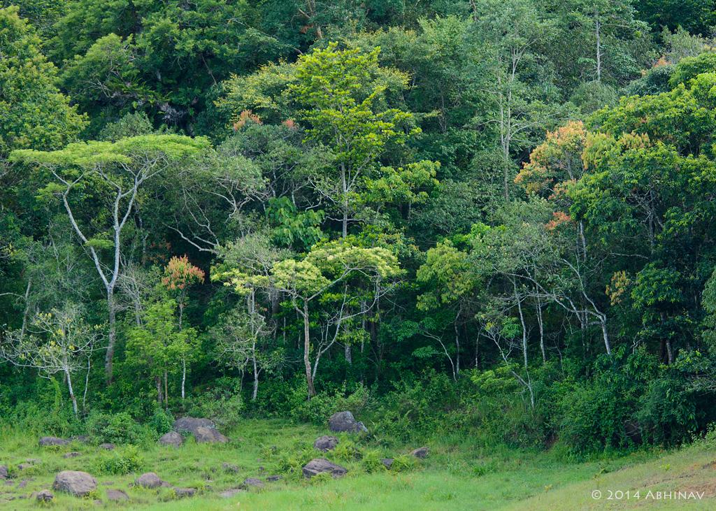 Semi Evergreen Forests Periyar
