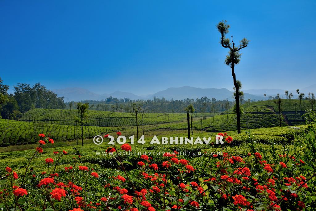 A view from Valparai